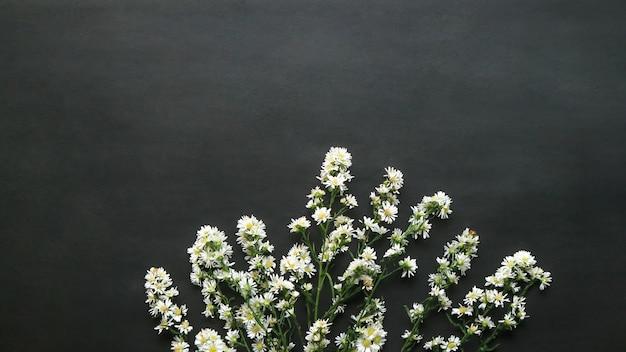 Draufsicht auf einige frische gänseblümchen
