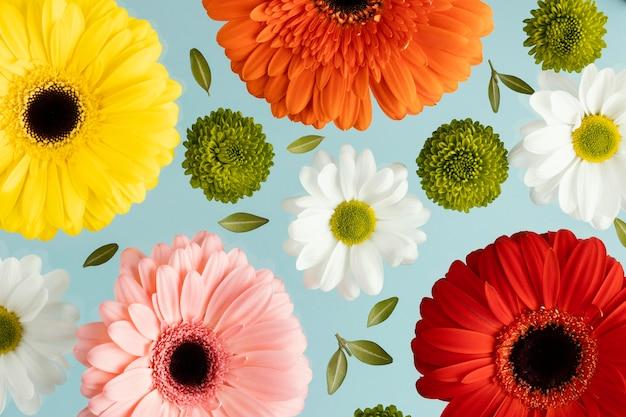 Draufsicht auf frühlingsgänseblümchen und gerbera
