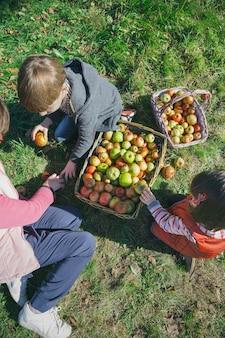 Draufsicht auf glückliche kinder und ältere frauen, die frische bio-äpfel in weidenkörbe mit obsternte legen. familienfreizeitkonzept.