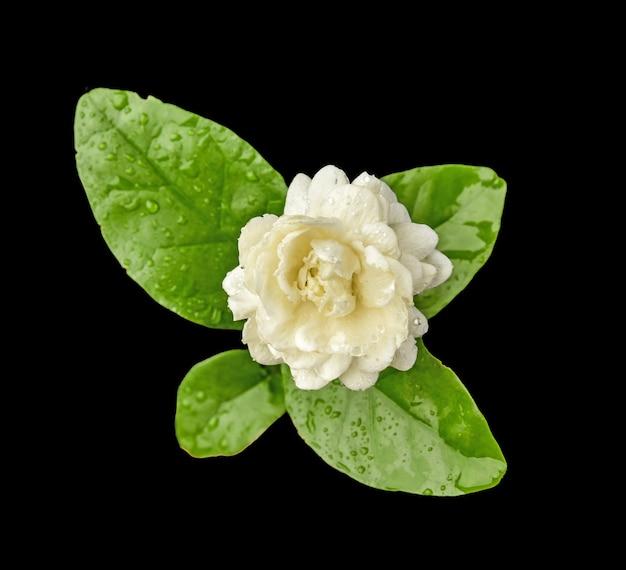 Draufsicht auf lotus auf schwarzem hintergrund