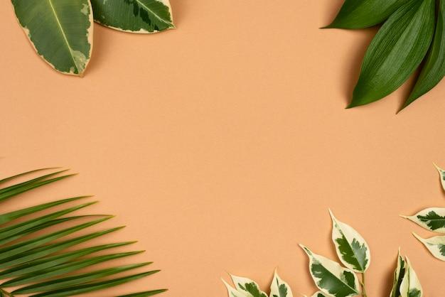 Draufsicht auf sortiment von pflanzenblättern mit kopierraum