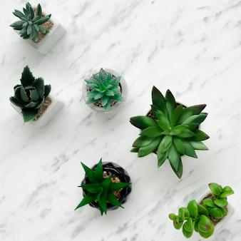 Draufsicht auf verschiedene pflanzen auf marmor