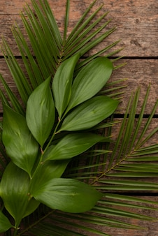 Draufsicht auf verschiedene pflanzenblätter