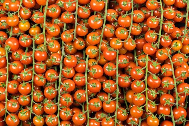 Draufsicht auf viele grüne tomaten der kirschzweigsorte, rote farbe. supermarkt,