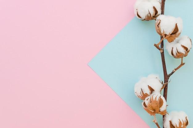 Draufsicht baumwollblumenrahmen mit zweig
