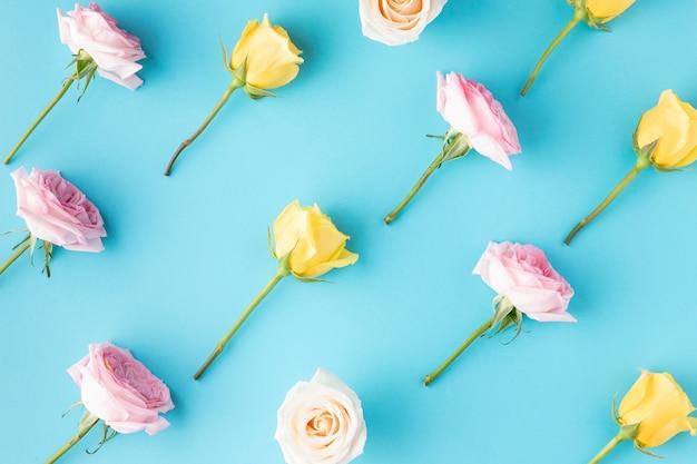Draufsicht blühende rosen