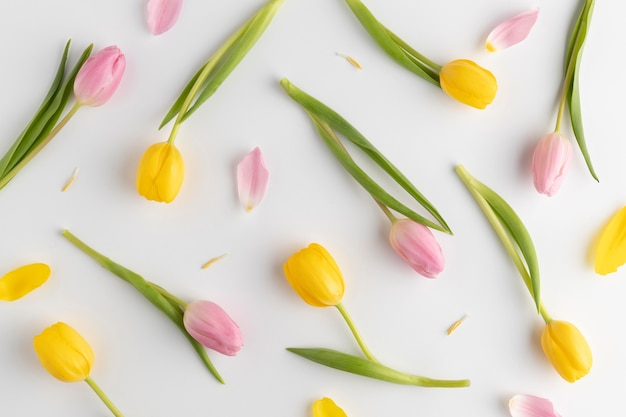 Draufsicht blühende tulpen