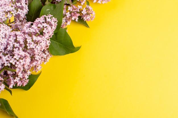 Draufsicht blüht lila schön auf dem gelben hintergrund