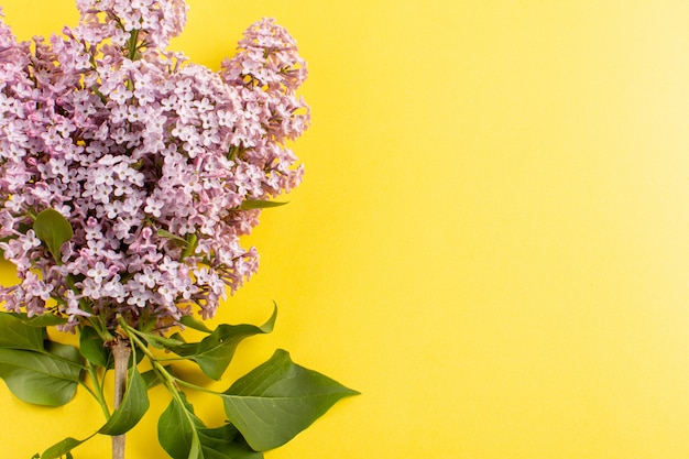 Draufsicht blüht lila schön lokalisiert auf dem gelben hintergrund