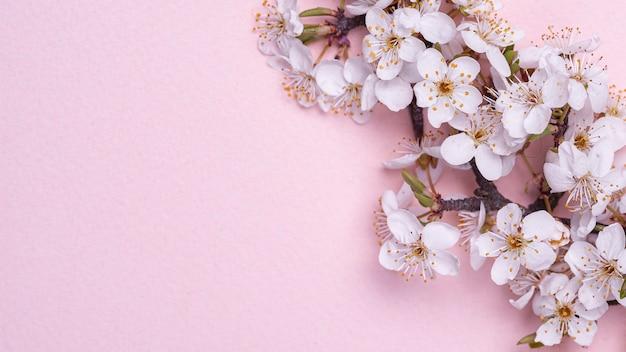 Draufsicht der äste mit blühenden frühlingsblumen auf rosa hintergrund