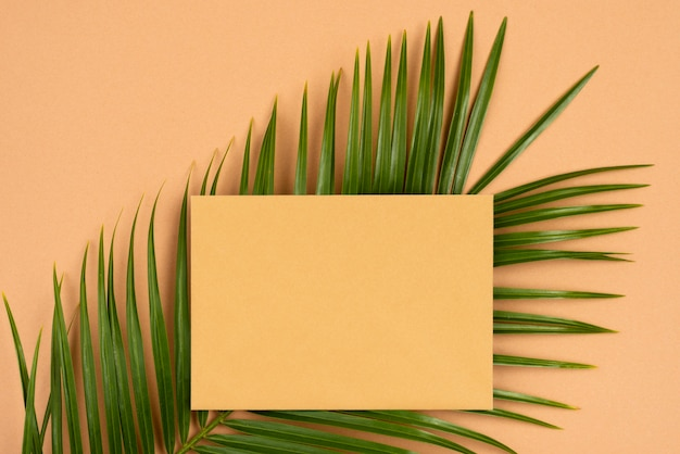 Draufsicht der dünnen pflanzenblätter mit papier