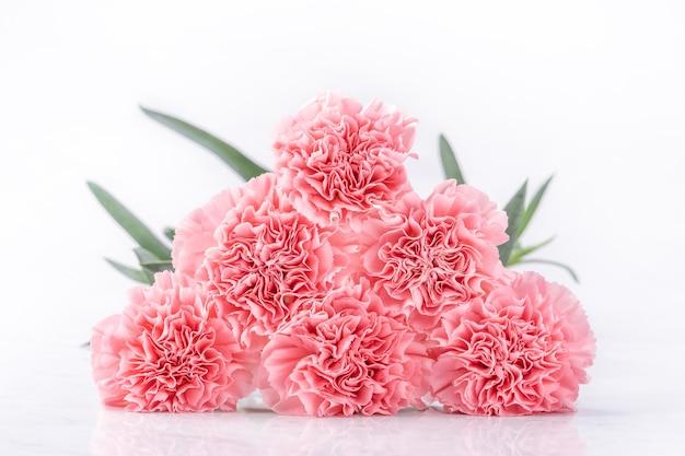 Draufsicht der eleganz, die zarte nelken der süßen rosa farbe blüht, lokalisiert auf hellem weißem hintergrund, nahaufnahme, kopienraum