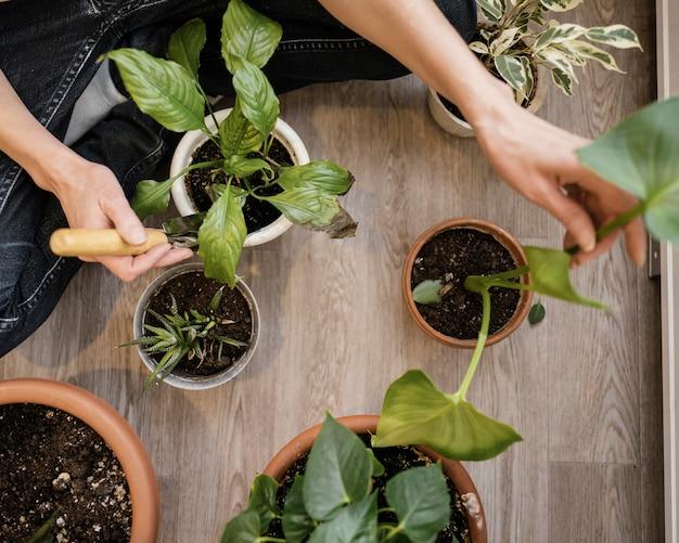 Draufsicht der frau, die zimmerpflanzen pflanzt