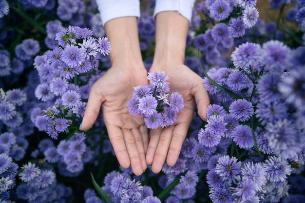 Draufsicht der frauenpalme, die lila margaret blumenblüte im garten hält