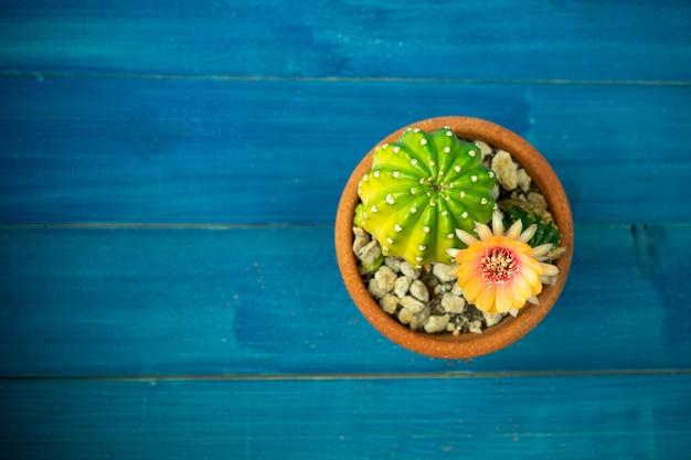 Draufsicht der gelben, orange und roten farbe der lobivia-kaktusblume in einem topf mit einem grünen gelben kaktus