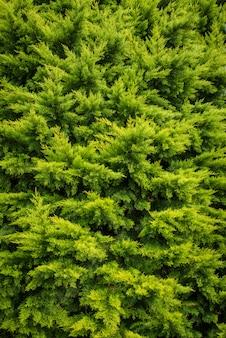 Draufsicht der grünen bäume