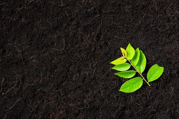Draufsicht der grünen blätter auf frischem schwarzen boden