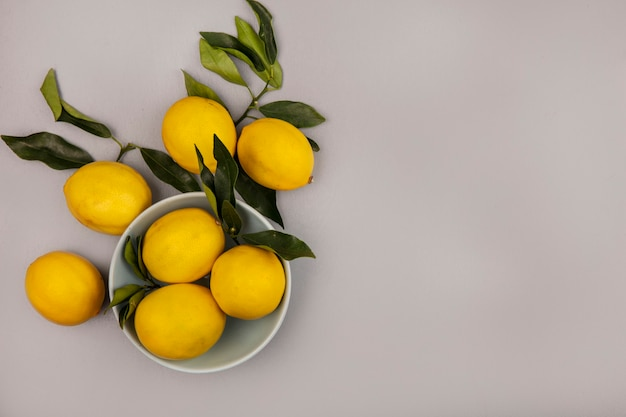 Draufsicht der guten quelle von vitamin c-zitronen auf einer schüssel mit blättern mit zitronen lokalisiert auf einem weißen hintergrund mit kopienraum