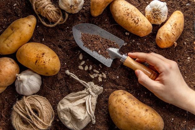 Draufsicht der hand, die gartenwerkzeug mit kartoffeln hält