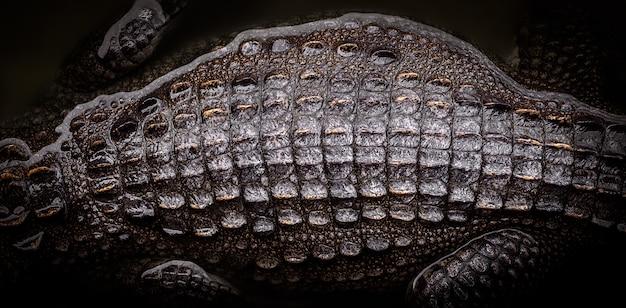 Draufsicht der krokodilrückseite