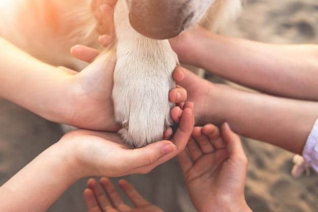 Draufsicht der menschlichen hände und der hundepfote