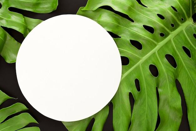Draufsicht der monstera-pflanzenblätter mit kopienraum