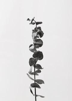 Draufsicht der pflanze mit blättern