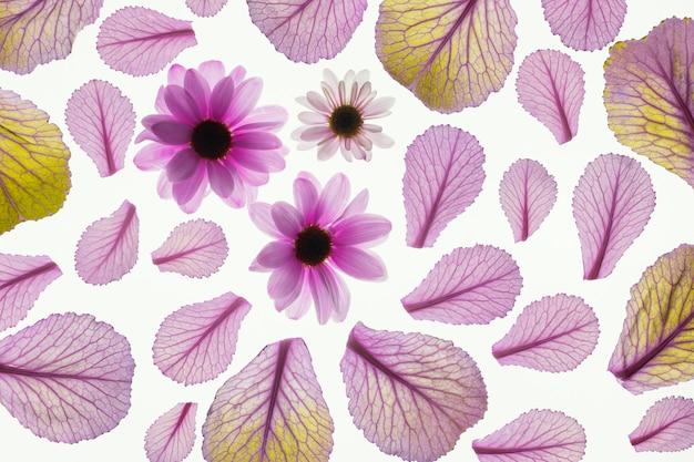 Draufsicht der pflanzenblätter mit gänseblümchen