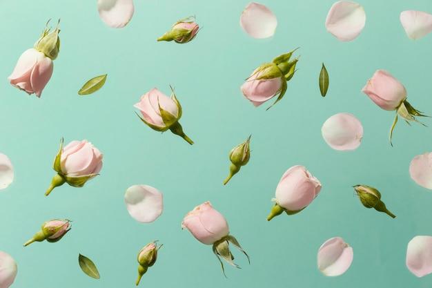 Draufsicht der rosa frühlingsrosen