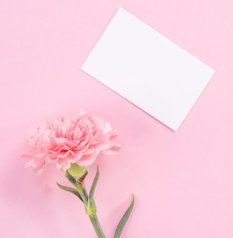 Draufsicht der rosa nelke auf rosa tischhintergrund für muttertagsblume