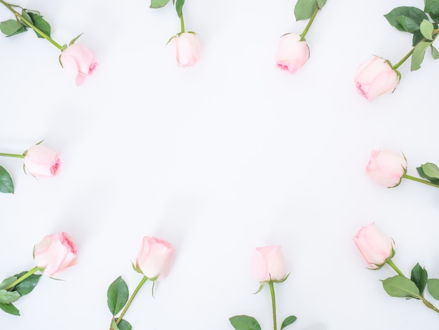 Draufsicht der rosa rosenblumen auf weißer wand