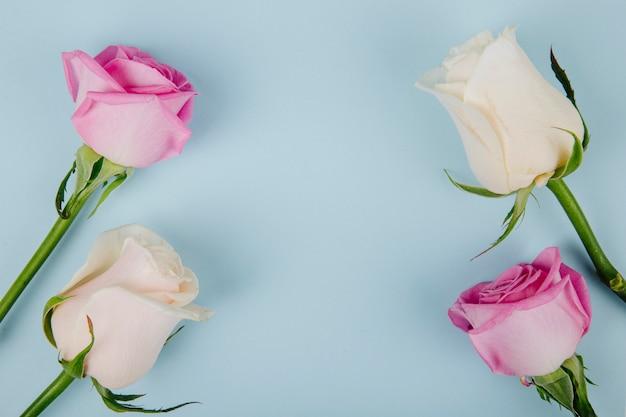 Draufsicht der rosa und weißen farbrosen lokalisiert auf blauem hintergrund mit kopienraum
