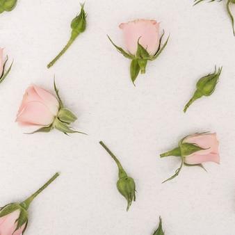 Draufsicht der rosafarbenen blumen des nahaufnahmefrühlinges
