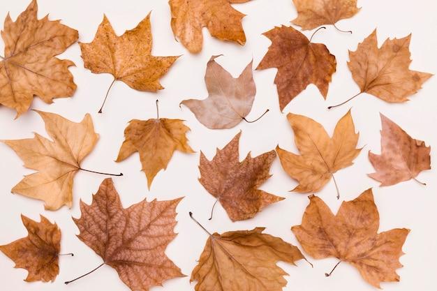 Draufsicht der sammlung von herbstblättern