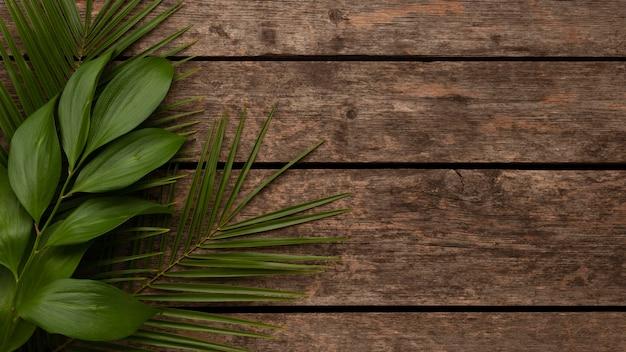 Draufsicht der schönen pflanzenblätter mit kopienraum