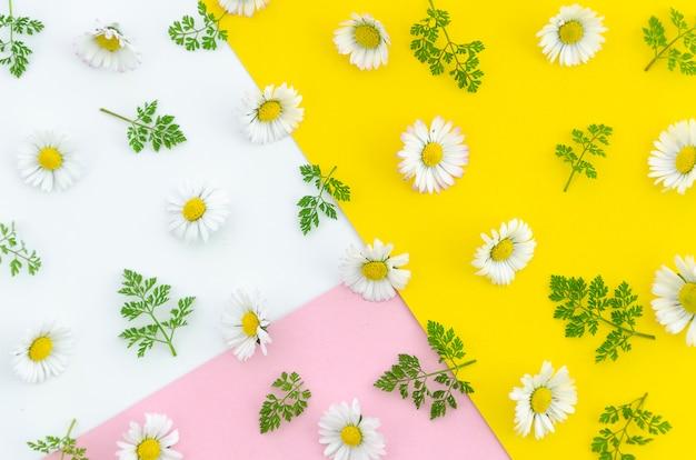 Draufsicht der sommerbeschaffenheitsblumen und -blätter über weißen, rosa und gelben hintergrund.