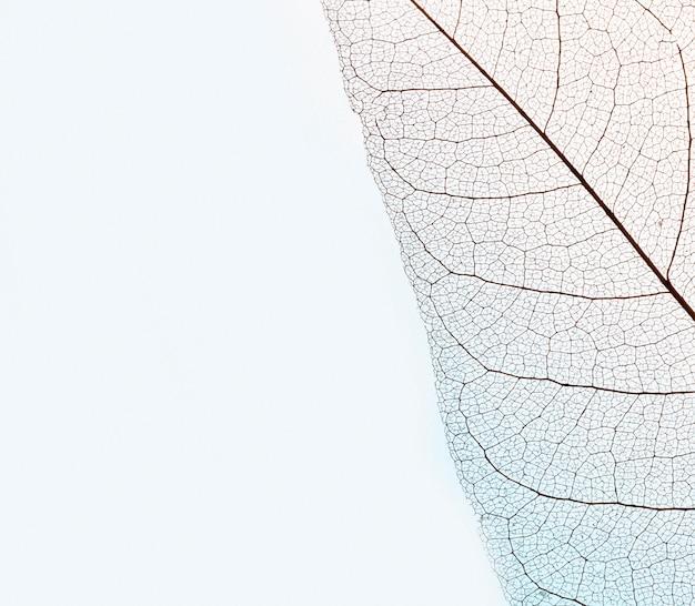 Draufsicht der transparenten blattschicht