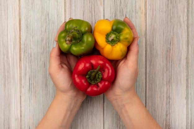 Draufsicht der weiblichen hände, die bunte paprika auf einer grauen holzoberfläche halten