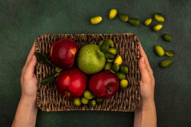 Draufsicht der weiblichen hände, die eine weidenschale der frischen äpfel mit kinkans lokalisiert auf einer grünen wand halten