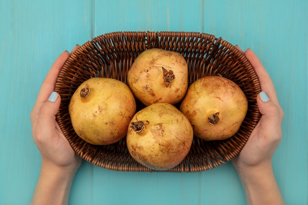 Draufsicht der weiblichen hände, die einen eimer der gelben granatäpfel auf einer blauen oberfläche halten