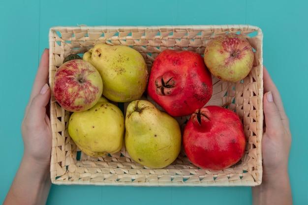 Draufsicht der weiblichen hände, die einen eimer mit frischen früchten wie apfelgranatäpfeln und quitten auf einem blauen hintergrund halten
