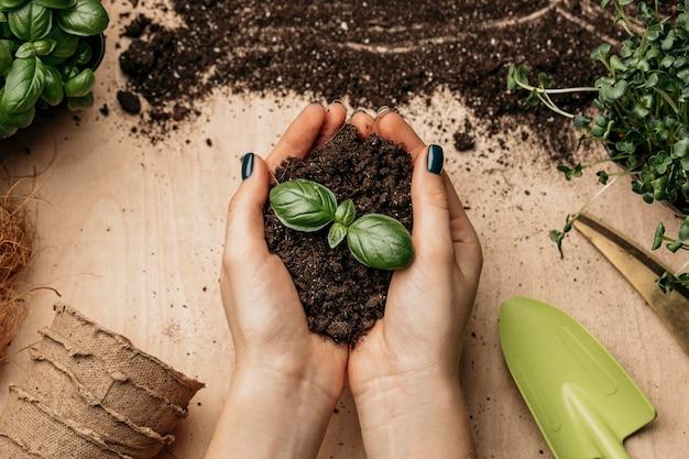 Draufsicht der weiblichen hände, die erde und pflanze halten