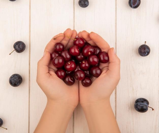 Draufsicht der weiblichen hände, die rote köstliche kirschen mit dunkelvioletten schlehen lokalisiert auf einem weißen hölzernen hintergrund halten
