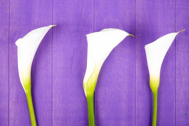 Draufsicht der weißen farbe calla lilien lokalisiert auf lila holzhintergrund