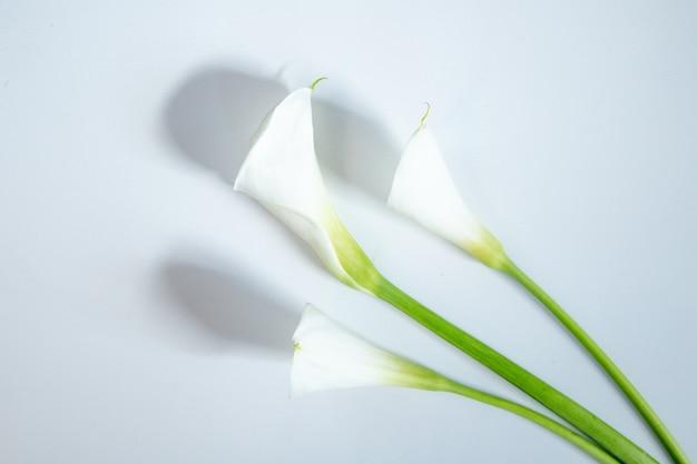 Draufsicht der weißen farbe callalilien lokalisiert auf weißem hintergrund