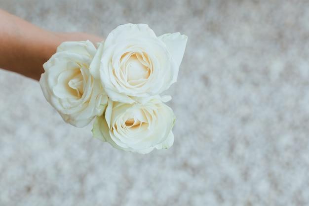 Draufsicht der weißen rose in einer hand mit verschwommenem hintergrund
