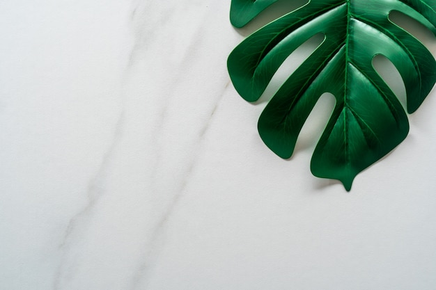 Draufsicht des abstrakten hintergrunds der weißen tonmarmorbeschaffenheit mit grünem natürlichem blatt als rahmendekoration.