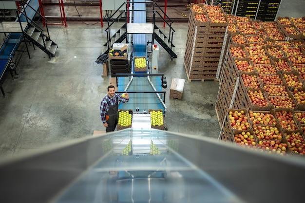 Draufsicht des arbeiters, der an der produktionslinie des lagerhauses der bio-lebensmittelfabrik arbeitet, das apfelfrucht zum verkauf verpackt.