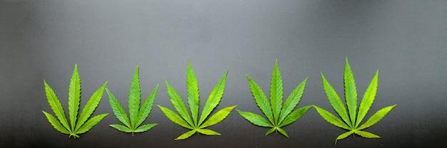 Draufsicht des cannabisblatts auf schwarzem hintergrund. marihuana geht