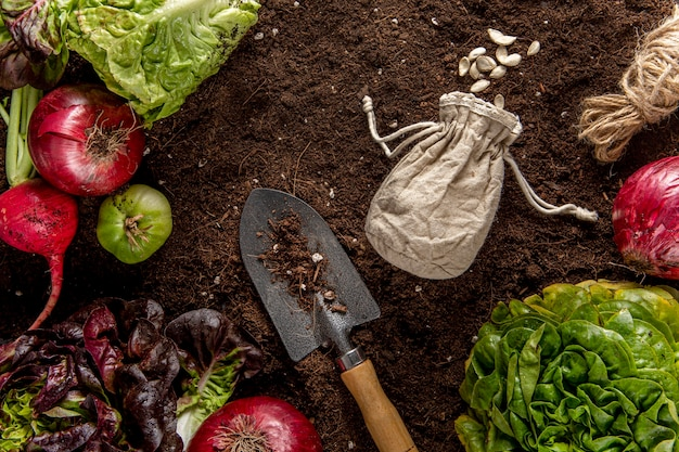 Draufsicht des gemüses mit salat und werkzeug